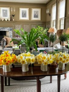 These beautiful daffodils were picked right from my gardens and placed in faux bois vases in my large Brown Room. Wait until you see my long daffodil border this year – the flowers are coming up so wonderfully.