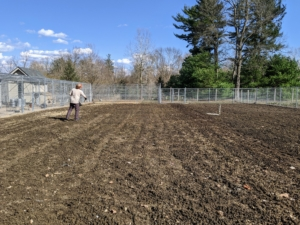 We started prepping the vegetable garden earlier this month with a good sprinkling of fertilizer. Fertilizer replaces lost nutrients, so levels are acceptable for healthy growth. During the cold season, my chickens, Guinea fowl, and geese are also given access to the vegetable gardens. Not only do they provide a tremendous nitrogen source to the area, they are helpful in turning the soil, eliminating weeds, and creating compost in place.