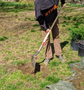 Brian moves closer to the carriage road where the holly and juniper shrubs are positioned.