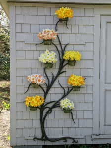 And here are some of the daffodils cut and placed on my metal wall tree on my electrical shed. When cutting daffodils, they should be kept alone in the vase as their stems secrete a fluid that promotes wilting in other flowers. If you need to combine flowers, soak them alone first and then add them to the arrangements last. What daffodils are growing around your home? Share your favorite varieties with me in the comments section below.