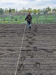 Each line of twine is carried straight across to the other side and tied to the fence. All the twine will be removed once the beds are complete.
