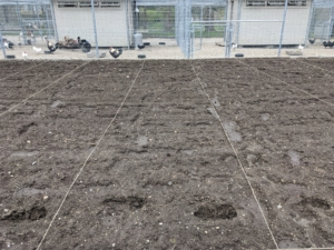 Here, one can see the twine stretched lengthwise to show the size of the beds - narrow footpaths will also be dug alongside each bed using the twine as a guide. If building a new vegetable garden, test the soil to gain more knowledge of its pH, phosphorous, lime, potassium, soluble salts, and soil texture. Soil testing kits are available at garden centers, or through a local cooperative extension.