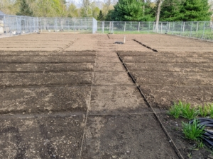 Here is the main footpath between the two sides and leading to the center herb garden. This aisle is also measured and lined with jute twine.