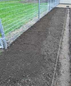 The same process is done on the front fence and the back fence of this garden. After germination, the seedlings develop into bushy plants before producing buds and flowers. We'll see the beautiful and fragrant blooms later this summer.