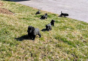 "This photo shows the first time my puppies went outside. The weather was nice and by this stage, they were ready to explore. Each puppy had a different reaction that aligns with their personality. ""Yellow,"" who is very brave and outgoing, was thrilled whereas ""Red"" was shy and cautious."