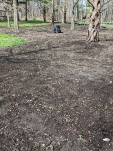 If you follow this blog regularly, you may recall we transformed this space behind the chicken coops last year. We cleared the area and prepared the soil for planting.