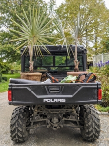 Once it gets cold, all my tropical plants displayed on the terraces and in the courtyards are moved indoors. The Polaris can carry heavy pots with ease.