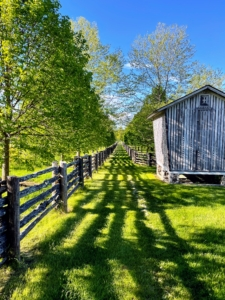 The day was perfect for entertaining - sunny with temperatures in the 60s. Here is the old corn crib, with the afternoon sun casting shadows of the antique fence down the footpath between my paddocks.