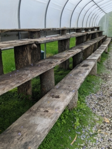 By the afternoon, the shelves in both hoop house are empty. These shelves are made from wood milled right here at the farm. The long planks are secured to stumps from felled trees. It is a great way we use and repurpose natural elements here on the property.
