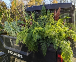 We have several Polaris vehicles here at the farm. Here is one filled with plants. The back cargo area makes it very convenient to transport plants to and from my greenhouse. We do so much carting around the farm, it is important to have a roomy and durable back space for tools, supplies, plantings, etc.