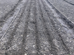 These trenches are pretty shallow - just about an inch to indicate the designated rows.