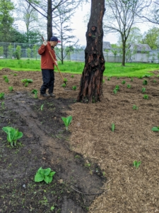 Yesterday, I instructed the crew to top dress the bed with a generous layer of mulch. This mulch was made right here at the farm. It will deter weeds and help retain moisture for these plants.