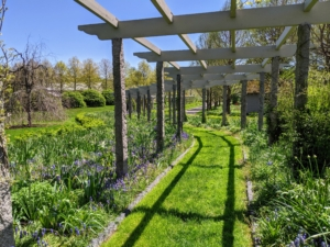 At the start of May, this garden was filled with Muscari and many buds of our spring-blooming bulbs.