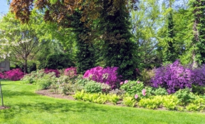 I just love how the rich bold colors of azaleas look in the gardens. All the new azaleas are great additions to this area of the farm. The beautiful displays will get even more stunning year after year.
