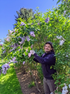 Meanwhile, here's my head gardener, Ryan McCallister, down at the lilac allee cutting some flowers for the table. I asked that some of every color be cut for our arrangements.
