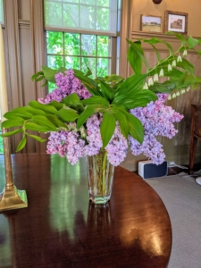 At the opposite end of the long table are taller vases filled with lilacs and Solomon's Seal. Solomon's seal, Polygonatum, is a genus of elegant woodland plants that are native to North America. In spring, the arching stems are lined with small, bell-shape, white blooms.