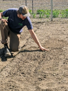 Once the seeds are tucked into the soil, Brian backfills the entire furrow.
