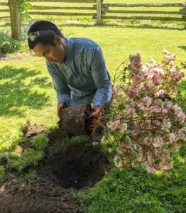 Meanwhile, Pasang is further up the road planting another azalea - it was all hands on deck to get 200 plants in the ground as quickly as possible.