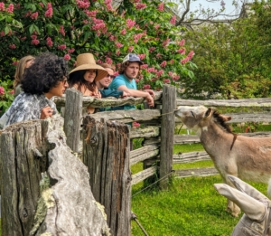"""Of course, a tour would not be complete without a stop at the donkey paddock to say hello to my five donkeys - Truman """"TJ"""" Junior, Jude """"JJ"""" Junior, Clive, Rufus and Billie."""