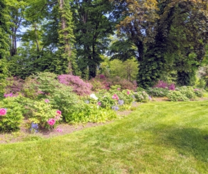 The group saw my long tree peony border planted in a semi-shade of giant maples near my Summer House. Many of the specimens were transplanted from my Turkey Hill garden in Westport, Connecticut and continue to thrive here at my Bedford, New York farm.