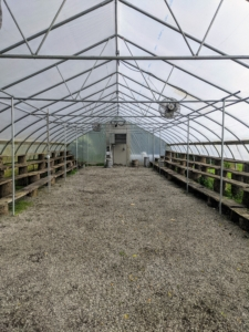 And here is the large citrus greenhouse - now empty for another season. It is so wonderful to see everything thriving here at the farm - I love this time of year when all my potted plants are outside in the fresh air. What plants are you bringing out of storage this week? Share your comments with me below.