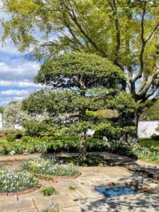 Here is a topiary American Holly tree standing over planting beds shaped like butterflies and a small reflecting pool. Bunny Mellon developed a love of plants and gardens at a young age. She began collecting botanical books when she was just 10 years old. She also loved garden design. In fact, you may know that Bunny designed gardens for some of her dearest friends, including the Rose Garden and the East Garden at the White House for Jacqueline Kennedy.