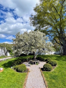 This tree is Malus 'Katherine'. Malus is a genus of about 35 species of deciduous trees and shrubs from Europe, Asia and North America. The name comes from the Latin for apple. 'Katherine' is an upright, spreading crabapple that matures to 20 feet tall. It was discovered as a chance seedling in Rochester, New York in 1928. Pink buds open to pinkish-white, double flowers in spring, then fade to white. The flowers are followed by greenish-yellow crabapples blushed with red that mature in fall and persist into early winter.