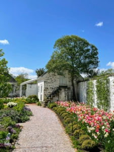 Here's a view toward the schoolhouse along the wall beds. Tulips fill out the wall beds on the northern side of the garden. Apple trees are trained against the wall in the candelabra style of espalier.