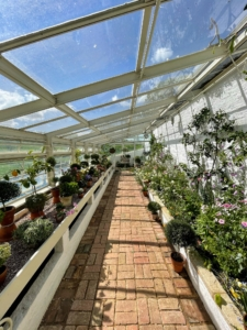 A few feet further is the inside of the Formal Greenhouse - still filled with plants.