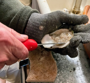 He shucked all the oysters for us himself. To shuck, he holds the oyster firmly in the gloved hand and the oyster shucking knife in the other. He places the tip of the shucking knife at the base of the hinge to open, and then loosens the meat.