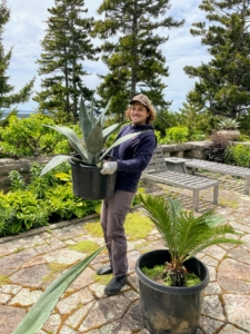 Ryan carries this agave out to the large terrace. A little extra care should be taken whenever working with sharp plants.