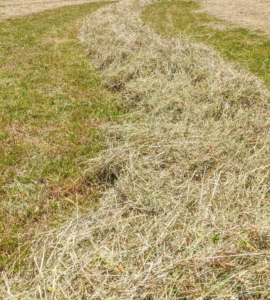 And here is a row completely raked and ready for the last stage – baling.