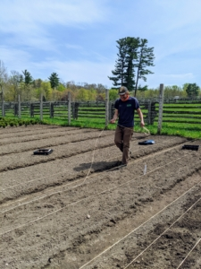 Once the potatoes are planted, Brian removes the twine from the bed. Long lines of twine can be saved for later use.