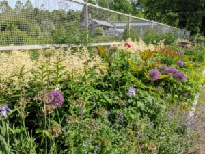 This garden bed is just outside my fenced flower cutting garden - both are among the first ones seen when visiting my farm. My cutting garden is several years old now and has developed more and more every year. I wanted the plants to be mixed, so every bed in this garden would be interesting and colorful.