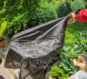 The cloth is placed into the vessel to protect its interior. This also makes it a lot easier come fall when the plants are removed from these pots and returned to their designated greenhouse where they live during the colder months.