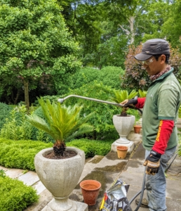As each sago palm is planted, Dawa gives it a good drink. It's always important to water after planting and transplanting. This is a good way to avoid transplant shock, and will help the plant settle in to its new location.