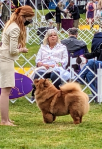 And here is Talosa, the sister to my dear Empress Qin. She is four years old now and loves to show. I am always excited to see the Chow Chow competition.
