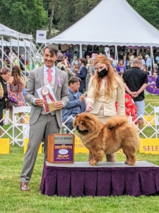 """And Talosa took """"Best of Opposite"""" - meaning, because the winning Chow was a male dog, they also award the best female. In the end, both Buddakan and Talosa did a great job. Tolosa and Buddakan are bred by Karen Tracy of Pazzazz Kennels."""