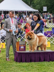 """Buddakan won """"Champion Select"""" - or second place to the breed winner."""