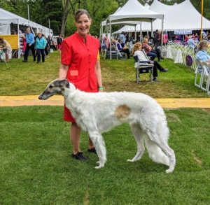 """Borzois are large Russian sighthounds that resemble some central Asian breeds such as the Afghan hound, Saluki, and the Kyrgyz Taigan. Borzois can generally be described as """"long-haired greyhounds"""". Borzois come in virtually any color. The coat is silky and flat, often wavy or slightly curly."""
