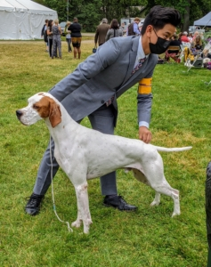 The Pointer's name define's its job - to point game birds for its hunter. The dog's coat comes in several colors, solid or in patterns. A large male can stand 28 inches at the shoulder and weigh up to 75 pounds, while a small female might weigh as little as 45 pounds and stand 23 inches.