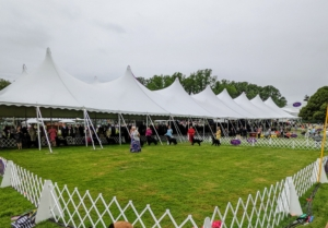 The breed shows happen in large rings, where the dogs are walked around to display their gaits and overall appearance. Here at Lyndhurst, there were a total of eight rings, and each breed class is scheduled a time to compete during the day.