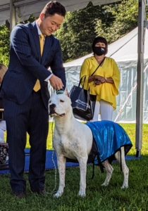 One of this year's new breeds is the Dogo Argentino. It is a large, white, muscular breed of dog that was developed in Argentina primarily for the purpose of big-game hunting, including wild boar. This breed also exhibits steadfast bravery and willingly protects its human companions.