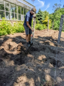 Brian and Dawa dig all the holes for our dahlias. These are fairly shallow holes and about a foot apart.