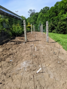 All the markers are inserted deeply into the soil next to each variety. The area looks quite odd without any plants, but it won't be long before they start to poke through the soil.
