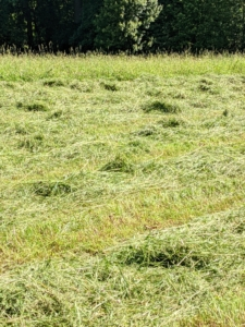 Here, one can see the mounded rows of cut and crimped grass.
