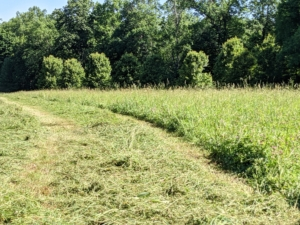 Here is another view after the mower-conditioner goes back and forth over the field. On the left - cut hay, and on the right, the hay that is still waiting to be mowed.