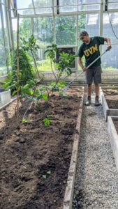 Once all five specimens are planted, Brian rakes the bed so the soil is level and tidy.