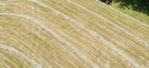 All the rows are perfectly straight. They will continue to dry out until they are made into bales. I am excited to see how many bales of hay we get from this cutting. I'll share the very interesting process of baling hay in my next blog. Stay tuned.