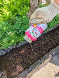 """Next, Ryan adds the food - a very important part of gardening. I always say, """"if you eat, so should your plants."""" Each planter gets a sprinkling of Osmocote – small plant food particles known as prills."""